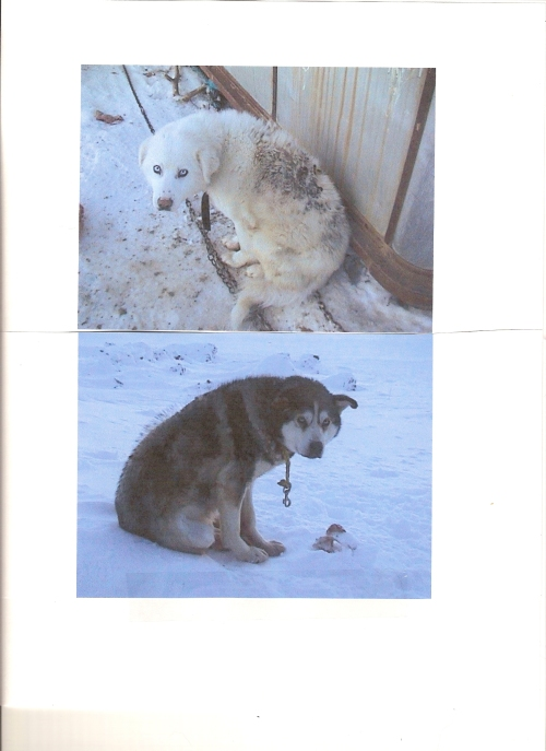 Legacy of the North Victims Pokiak's dogs