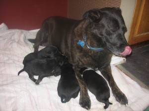 Pups with surrogate mom