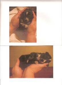 Yukon Pups 1
