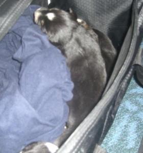 Yukon Pups 2