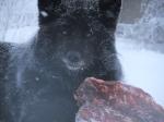 Jan 2013 Loki across ravine 049