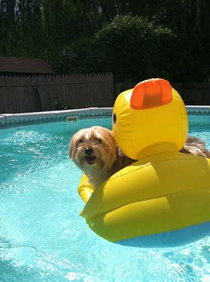 Carol Ann Schwalbach Webb      Brody the pool boy