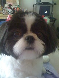 Gidget   submitted by Kathy VanNoorden Herman