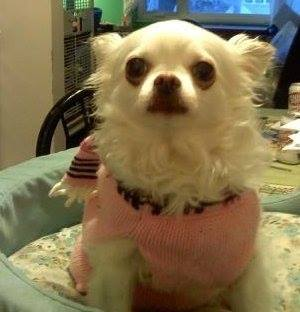 Lilli Belle Hi Loki, this is LilliBelle she is 10 years old and is your friend from NYC!