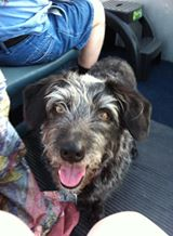 Lynne Gavin Hi, Loki, my name is Lucky! I am a friend of Lynne and her cats Bruce and Tricksy! I was rescued as a puppy!