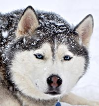 Mj Ryan s beautiful Yukon