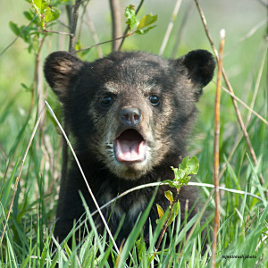 Photo: Animal Alliance of Canada